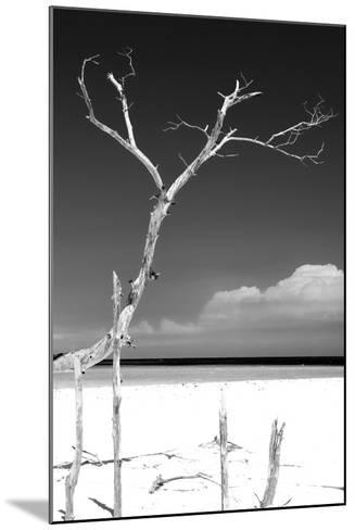 Cuba Fuerte Collection B&W - Trees and White Sand III-Philippe Hugonnard-Mounted Photographic Print