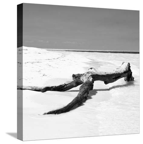 Cuba Fuerte Collection SQ BW - Black Tree on the Beach-Philippe Hugonnard-Stretched Canvas Print