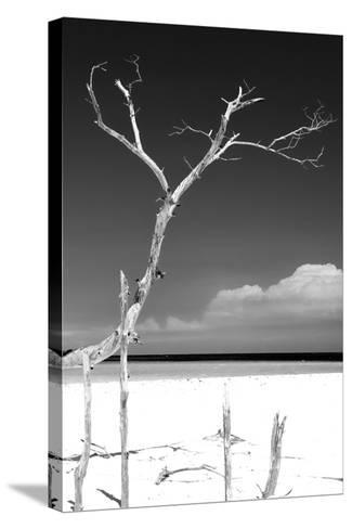 Cuba Fuerte Collection B&W - Trees and White Sand III-Philippe Hugonnard-Stretched Canvas Print