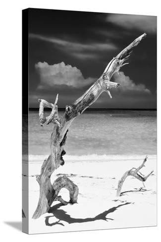 Cuba Fuerte Collection B&W - Trees and White Sand X-Philippe Hugonnard-Stretched Canvas Print