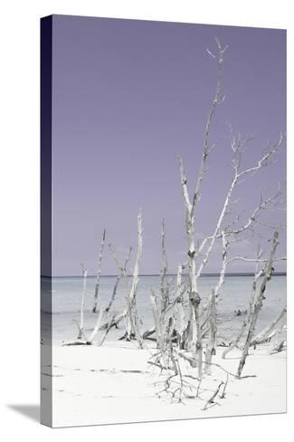 Cuba Fuerte Collection - Wild White Sand Beach III - Pastel Mauve-Philippe Hugonnard-Stretched Canvas Print