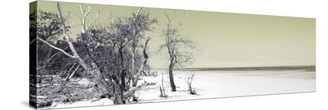 Cuba Fuerte Collection Panoramic - Sandy Beach Pastel Olive-Philippe Hugonnard-Stretched Canvas Print