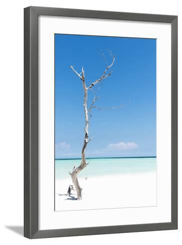 Cuba Fuerte Collection - Solitary Tree-Philippe Hugonnard-Framed Art Print