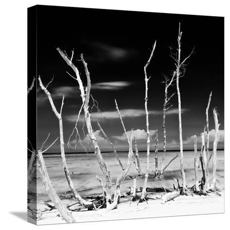 Cuba Fuerte Collection SQ BW - White water Tree Forest-Philippe Hugonnard-Stretched Canvas Print