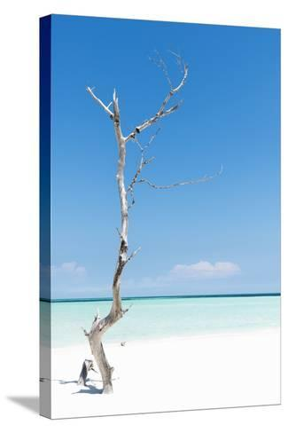 Cuba Fuerte Collection - Solitary Tree-Philippe Hugonnard-Stretched Canvas Print