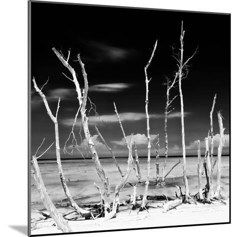 Cuba Fuerte Collection SQ BW - White water Tree Forest-Philippe Hugonnard-Mounted Photographic Print