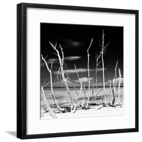Cuba Fuerte Collection SQ BW - White water Tree Forest-Philippe Hugonnard-Framed Art Print