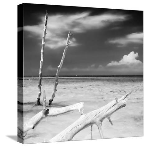 Cuba Fuerte Collection SQ BW - White Trees-Philippe Hugonnard-Stretched Canvas Print