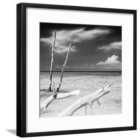 Cuba Fuerte Collection SQ BW - White Trees-Philippe Hugonnard-Framed Art Print