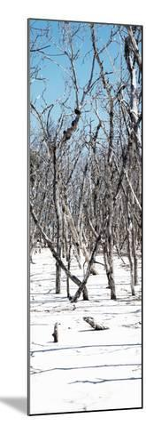 Cuba Fuerte Collection Panoramic - White Forest-Philippe Hugonnard-Mounted Photographic Print