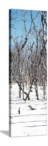 Cuba Fuerte Collection Panoramic - White Forest-Philippe Hugonnard-Stretched Canvas Print