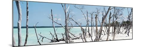 Cuba Fuerte Collection Panoramic - Tropical Wild Beach-Philippe Hugonnard-Mounted Photographic Print