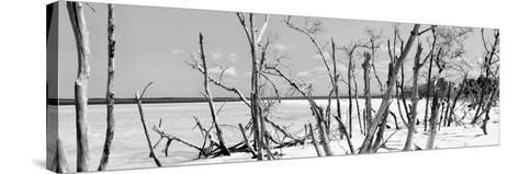 Cuba Fuerte Collection Panoramic BW - Tropical Wild Beach-Philippe Hugonnard-Stretched Canvas Print