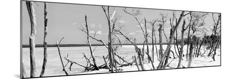 Cuba Fuerte Collection Panoramic BW - Tropical Wild Beach-Philippe Hugonnard-Mounted Photographic Print