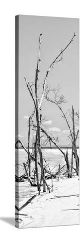 Cuba Fuerte Collection Panoramic BW - Tropical Wild Beach II-Philippe Hugonnard-Stretched Canvas Print
