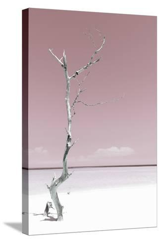 Cuba Fuerte Collection - Solitary Tree - Pastel Red-Philippe Hugonnard-Stretched Canvas Print