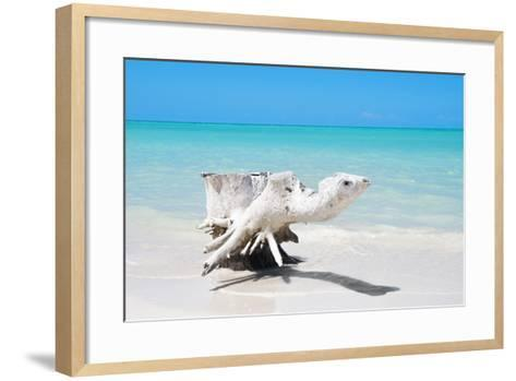 Cuba Fuerte Collection - Wooden Turtle on the Beach-Philippe Hugonnard-Framed Art Print