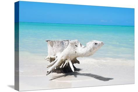 Cuba Fuerte Collection - Wooden Turtle on the Beach-Philippe Hugonnard-Stretched Canvas Print
