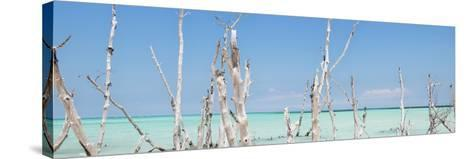 Cuba Fuerte Collection Panoramic - Ocean Wild Nature-Philippe Hugonnard-Stretched Canvas Print