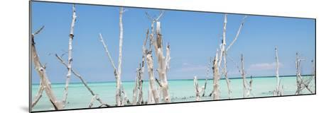 Cuba Fuerte Collection Panoramic - Ocean Wild Nature-Philippe Hugonnard-Mounted Photographic Print