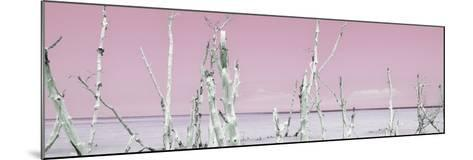 Cuba Fuerte Collection Panoramic - Ocean Wild Nature - Pastel Pink-Philippe Hugonnard-Mounted Photographic Print