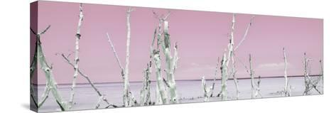 Cuba Fuerte Collection Panoramic - Ocean Wild Nature - Pastel Pink-Philippe Hugonnard-Stretched Canvas Print