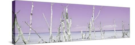 Cuba Fuerte Collection Panoramic - Ocean Wild Nature - Pastel Purple-Philippe Hugonnard-Stretched Canvas Print