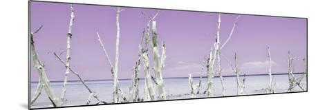 Cuba Fuerte Collection Panoramic - Ocean Wild Nature - Pastel Purple-Philippe Hugonnard-Mounted Photographic Print