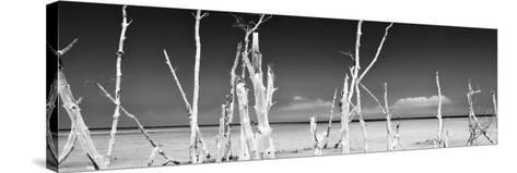 Cuba Fuerte Collection Panoramic BW - Ocean Wild Nature-Philippe Hugonnard-Stretched Canvas Print