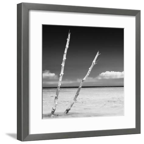 Cuba Fuerte Collection SQ BW - Aquatic Tree-Philippe Hugonnard-Framed Art Print