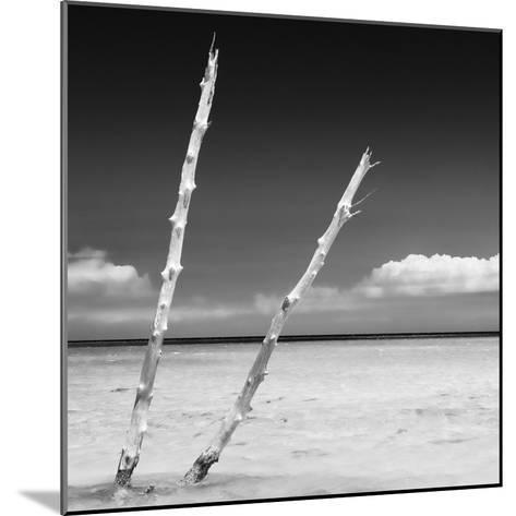 Cuba Fuerte Collection SQ BW - Aquatic Tree-Philippe Hugonnard-Mounted Photographic Print
