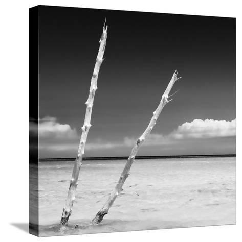 Cuba Fuerte Collection SQ BW - Aquatic Tree-Philippe Hugonnard-Stretched Canvas Print