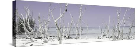 Cuba Fuerte Collection Panoramic - Wild Beach - Pastel Mauve-Philippe Hugonnard-Stretched Canvas Print