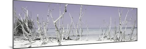 Cuba Fuerte Collection Panoramic - Wild Beach - Pastel Mauve-Philippe Hugonnard-Mounted Photographic Print
