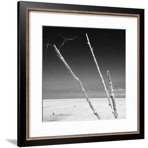 Cuba Fuerte Collection SQ BW - Aquatic Trees-Philippe Hugonnard-Framed Art Print