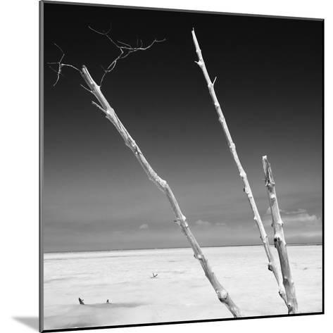Cuba Fuerte Collection SQ BW - Aquatic Trees-Philippe Hugonnard-Mounted Photographic Print
