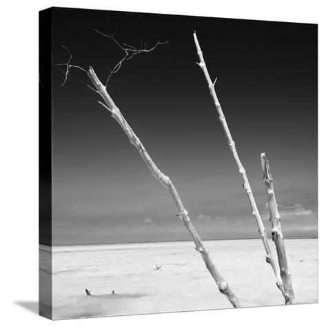 Cuba Fuerte Collection SQ BW - Aquatic Trees-Philippe Hugonnard-Stretched Canvas Print