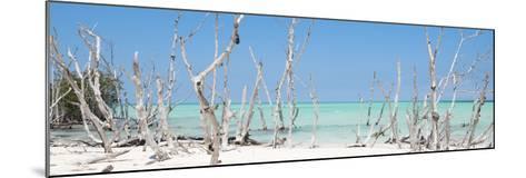 Cuba Fuerte Collection Panoramic - Wild Beach-Philippe Hugonnard-Mounted Photographic Print