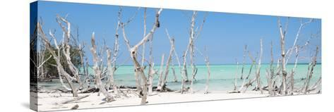 Cuba Fuerte Collection Panoramic - Wild Beach-Philippe Hugonnard-Stretched Canvas Print