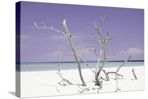 Cuba Fuerte Collection - Purple Stillness-Philippe Hugonnard-Stretched Canvas Print