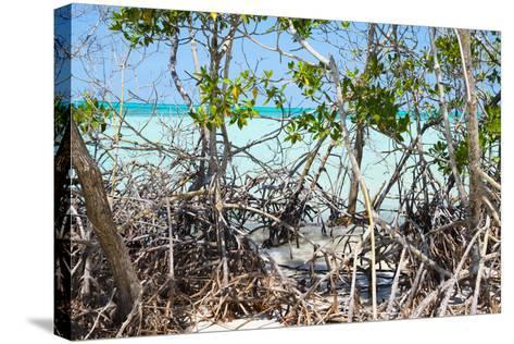 Cuba Fuerte Collection - Mangroves-Philippe Hugonnard-Stretched Canvas Print