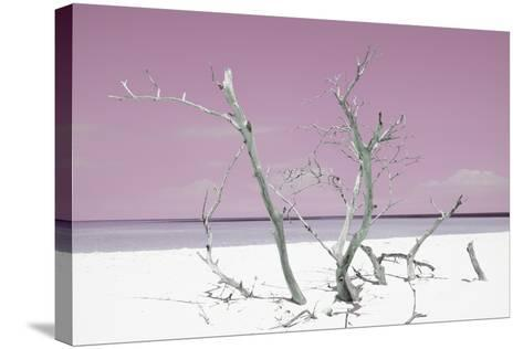 Cuba Fuerte Collection - Pink Stillness-Philippe Hugonnard-Stretched Canvas Print
