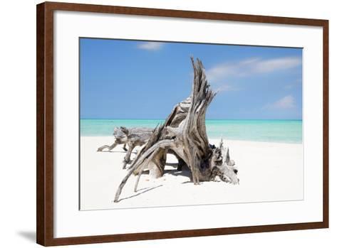 Cuba Fuerte Collection - Natural Sculpture-Philippe Hugonnard-Framed Art Print