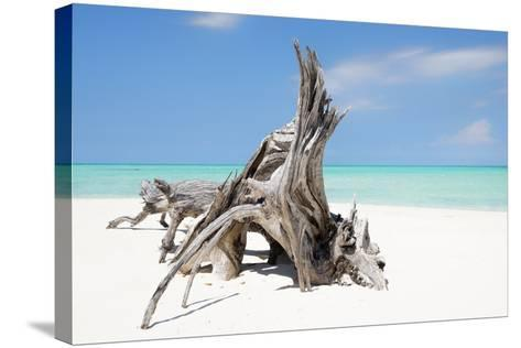 Cuba Fuerte Collection - Natural Sculpture-Philippe Hugonnard-Stretched Canvas Print