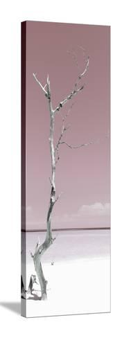 Cuba Fuerte Collection Panoramic - Solitary Tree - Pastel Red-Philippe Hugonnard-Stretched Canvas Print