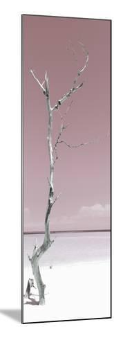 Cuba Fuerte Collection Panoramic - Solitary Tree - Pastel Red-Philippe Hugonnard-Mounted Photographic Print