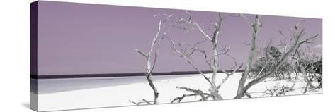 Cuba Fuerte Collection Panoramic - Tropical Beach Nature - Pastel Purple-Philippe Hugonnard-Stretched Canvas Print