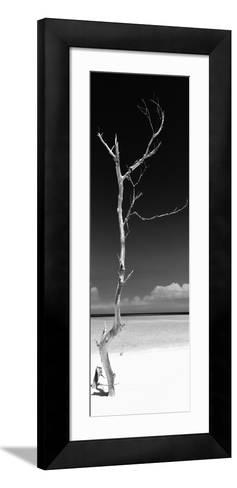 Cuba Fuerte Collection Panoramic BW - Solitary Tree-Philippe Hugonnard-Framed Art Print