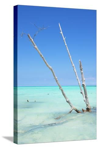 Cuba Fuerte Collection - Aquatic Tree-Philippe Hugonnard-Stretched Canvas Print