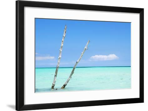 Cuba Fuerte Collection - Aquatic Tree II-Philippe Hugonnard-Framed Art Print